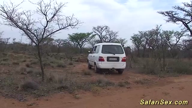 wild african safari sex orgy Preda Stormy and Devinn