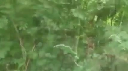 Horny french boys in the woods Porno Move Hd