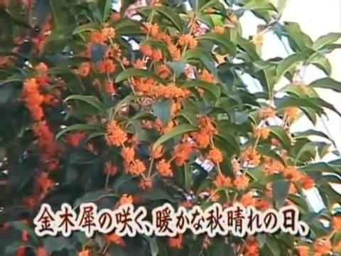Japanese catfight tsubomi Big natural chubby milf