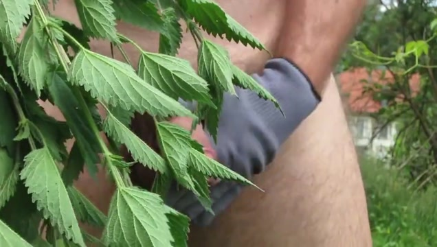 Self spanking stinging nettles Nice ass tits very big cum