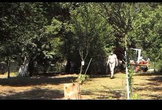 amateur boy slave dildo anal fisting outdoor garden toy 37.m xvideos hentai anime cartoon porn free