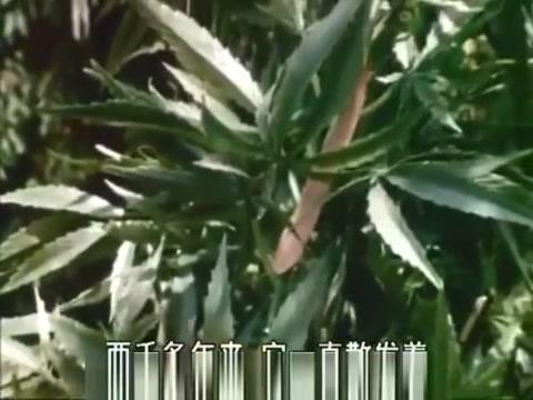 Aphrodisiac: The Sexual Secret Of Marijuana (1971) Lonely moms in Baden