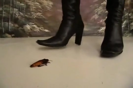 Crush roach with boots - clip 07 Narec Sex Video